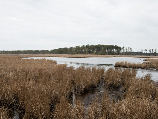 A view of a receding marsh at Blackwater Wildlife Refuge.