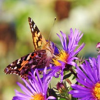 Stone: Painted Ladies, a driveway moment