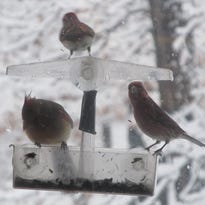 It's cold outside: Birders help feathered friends through winter