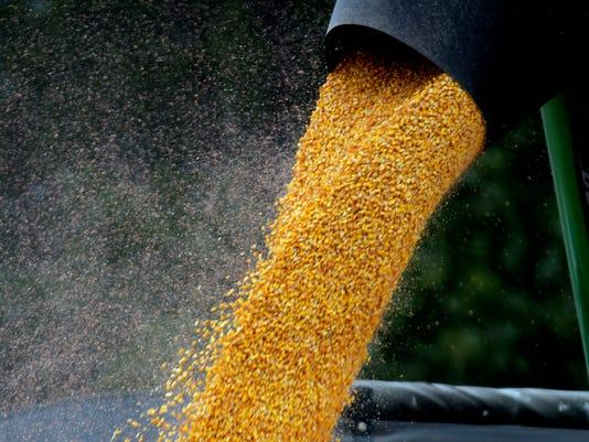 Illinois Corn Harvest_Hill