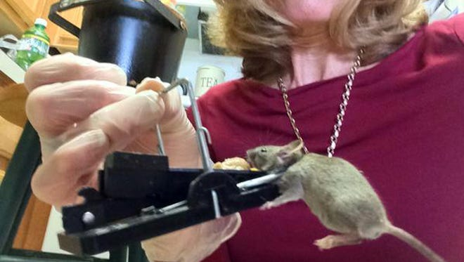 A resident at a senior citizens apartment complex caught this mouse under her sink.