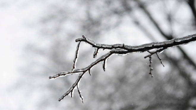Ice covers trees at Centennial Park on Monday.