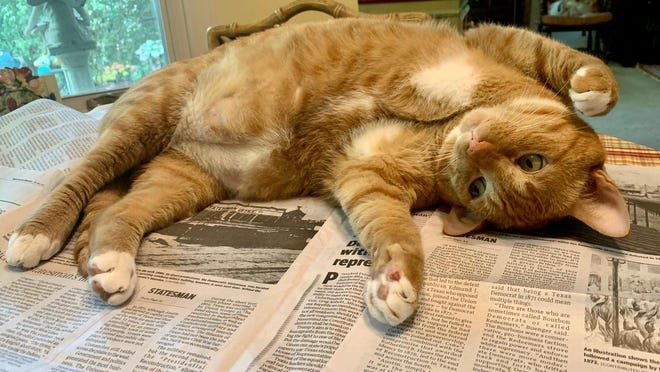 Harley, a Westlake cat, rarely misses an opportunity to be on top of the news and likes to share the Austin American-Statesman with his family on a lazy Sunday afternoon.