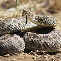 Family uses rattlesnake bite experience to warn others of danger