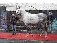 Meet the Horses of Odysseo by Cavalia