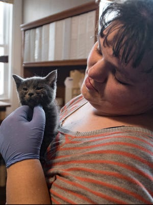 Charity Pauley checks the eyes of a cat at Purrfect Companions on Monday morning. Charity has volunteered at the cat rescue for five months.