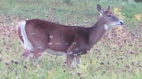 Apply now for your antlerless deer permit.
