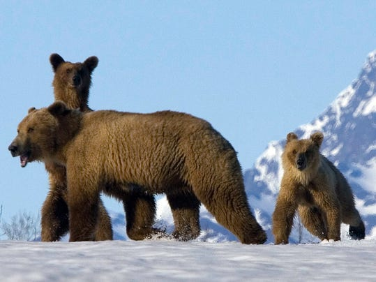AP_Travel_Trip_Alaska_Wildlife