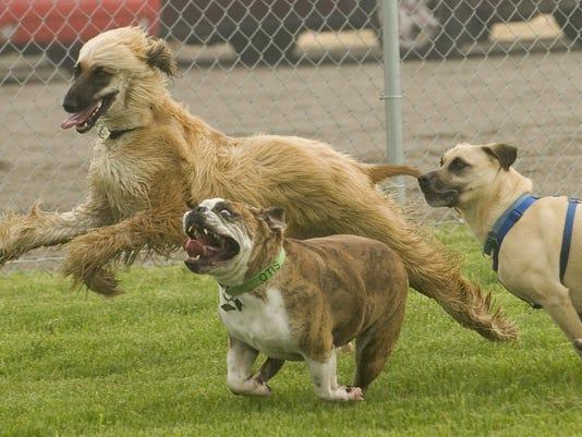 mto dog park proposal