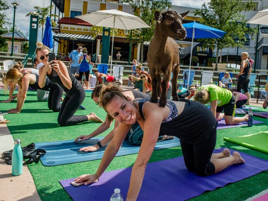 Goat Yoga will take place Sunday at Double BB Farms.