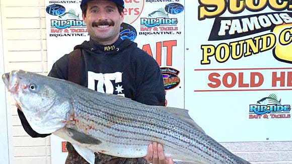 """Tim Daley with a beautiful 41"""", 25 lb striper that"""