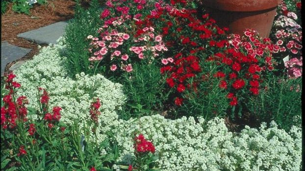 Various shades of red on different varieties of flowers create a color palette among green foliage and white accent flowers.