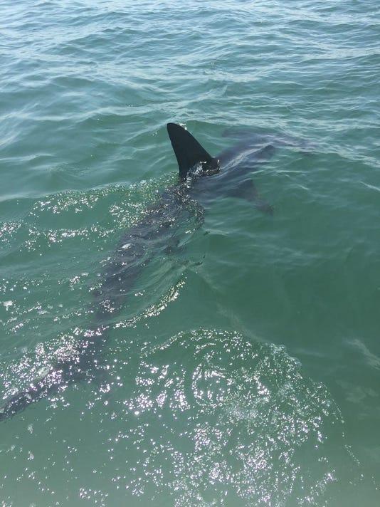 SHARK3