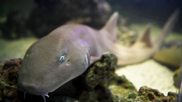 The Frame: Hatching a shark in Hendersonville