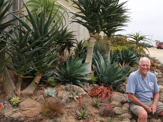 Alluring Aloes