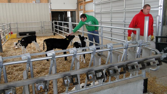 Erik and Russ Warmka are busy getting their farm ready for the Dodge County Dairy Brunch June 4.  The family recently built a new calf barn and with curtain sides, visitors will be able to observe the calves in their various age pens.