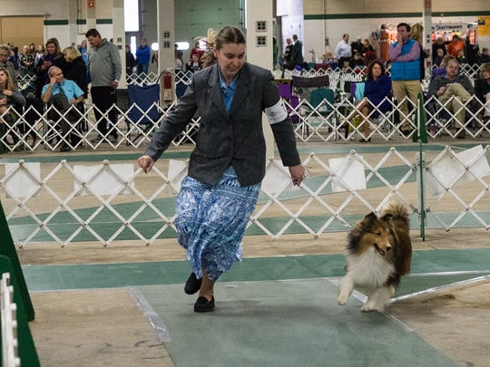 Kelly Clark of Lansing runs through a routine with her two year-old sheltie named Oscar at the Ingham County Kennel Club Dog Show at the MSU Pavilion Saturday, November 28, 2015.