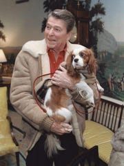President Ronald Reagan and Rex, his King Charles spaniel, in the Diplomatic Reception Room, 1986.