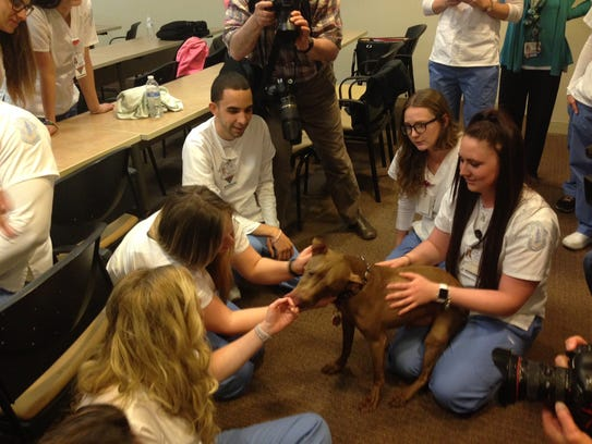 Therapy dog Aladdin licks students from Our Lady of