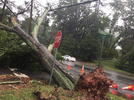 A tree sits on a utility line at the corner of Greenville
