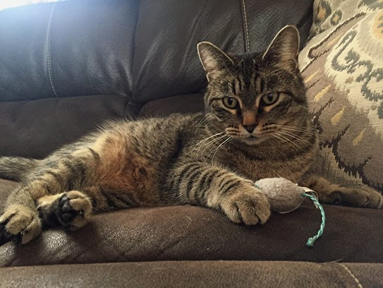 Lola is a beautiful, adult, spayed-female gray tabby.