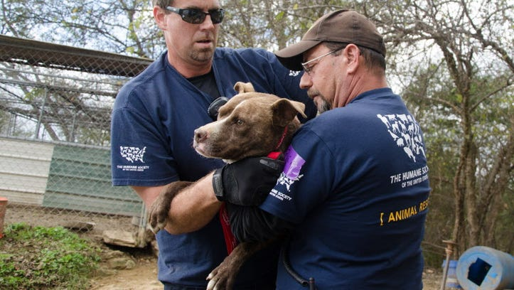 Rescuers seize dogs from a suspected dog fighting operation