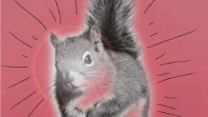 We have nothing to fear but fear itself. And squirrels.