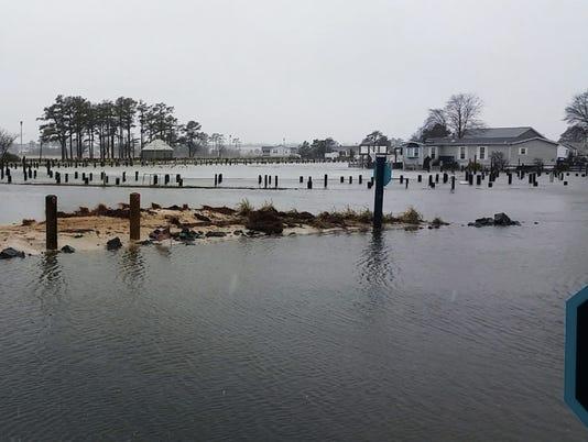 long-neck-flood.jpg