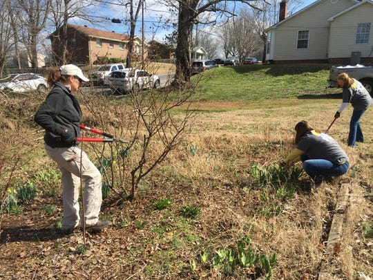 Volunteers uncovered early springtime flowers in bloom as they cleared away brush at the community garden.