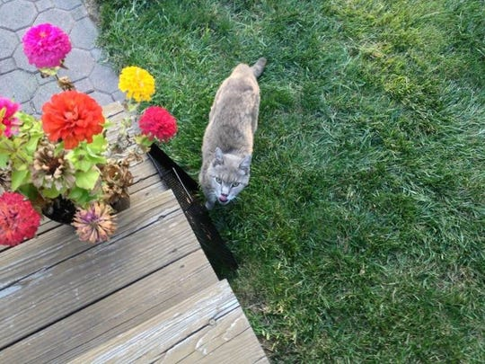 Rutger, the Rutgers Gardens cat, died Monday at 21.