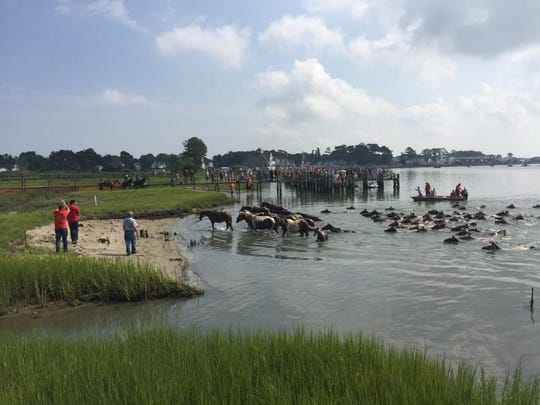 The Chincoteague ponies come ashore, completing their 91st Annual Pony Swim, on Wednesday, July 27, 2016 on Chincoteague, Virginia.