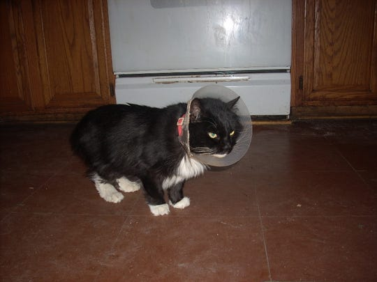 Midnight the cat in 2011.