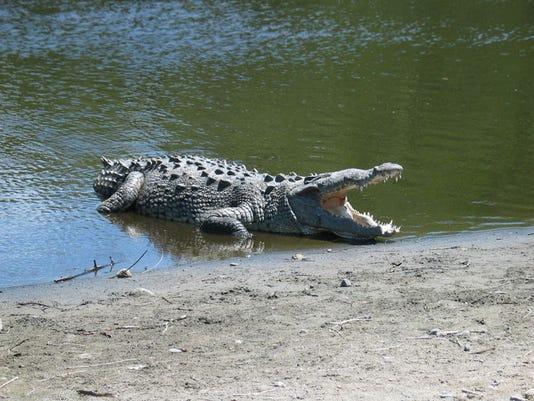 croc3.jpg