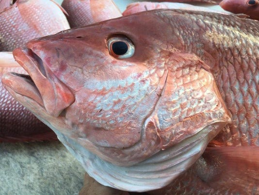 anglers get ready and wait for red snapper season announcement