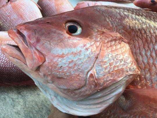 Red snapper weekend was a success for area offshore anglers, including those aboard Lady Chris party boat out of Taylor Creek Marina in Fort Pierce.