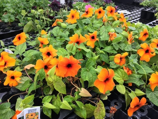 Flowers blooming in planters at Turn Pike Greenhouse