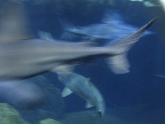 Drink with the sharks at Adventure Aquarium on the Camden Waterfront.
