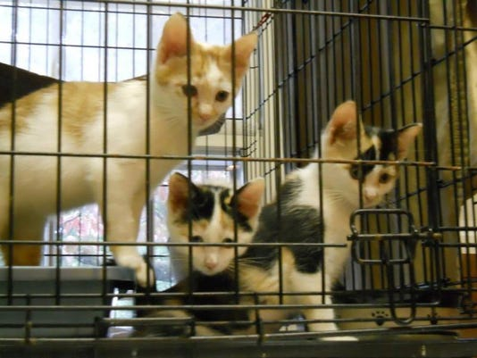p.litter.cats.jpg