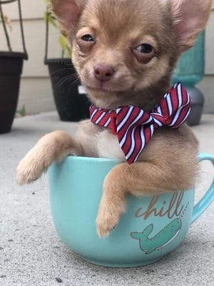"""Puff in a Cup"""