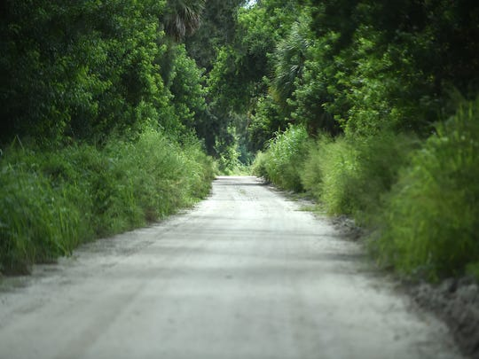 A lush canopy of trees lines the dirt roadway of the north end of the Jungle Trail, just south of the Pelican Island National Wildlife Refuge viewing area, in Indian River County. Jungle Trail is an 8-mile dirt road built in the 1920s, north of Vero Beach, and is on the National Register of Historic Places.
