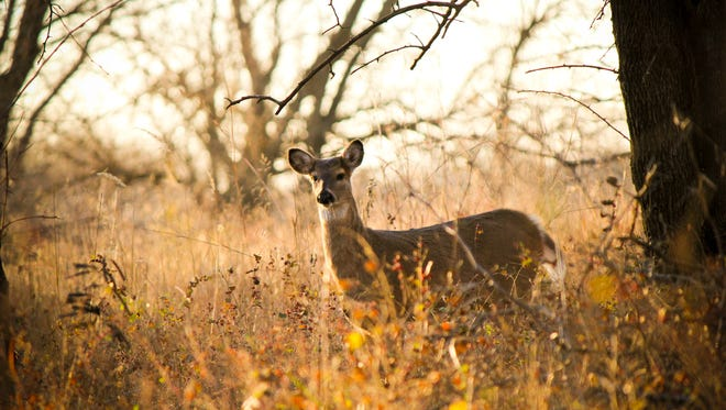 Have you applied for a Pennsylvania antler-less deer license?