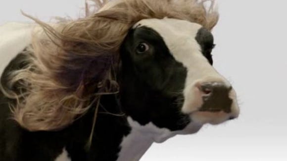 A Chick-Fil-A ad plays before a video of Sen. Thad Cochran making a truly innocent comment on animals. But the timing couldn't be more off...