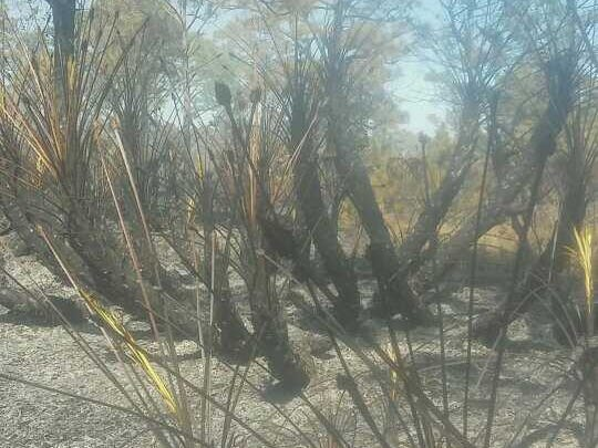 The charred remains of a brush fire.