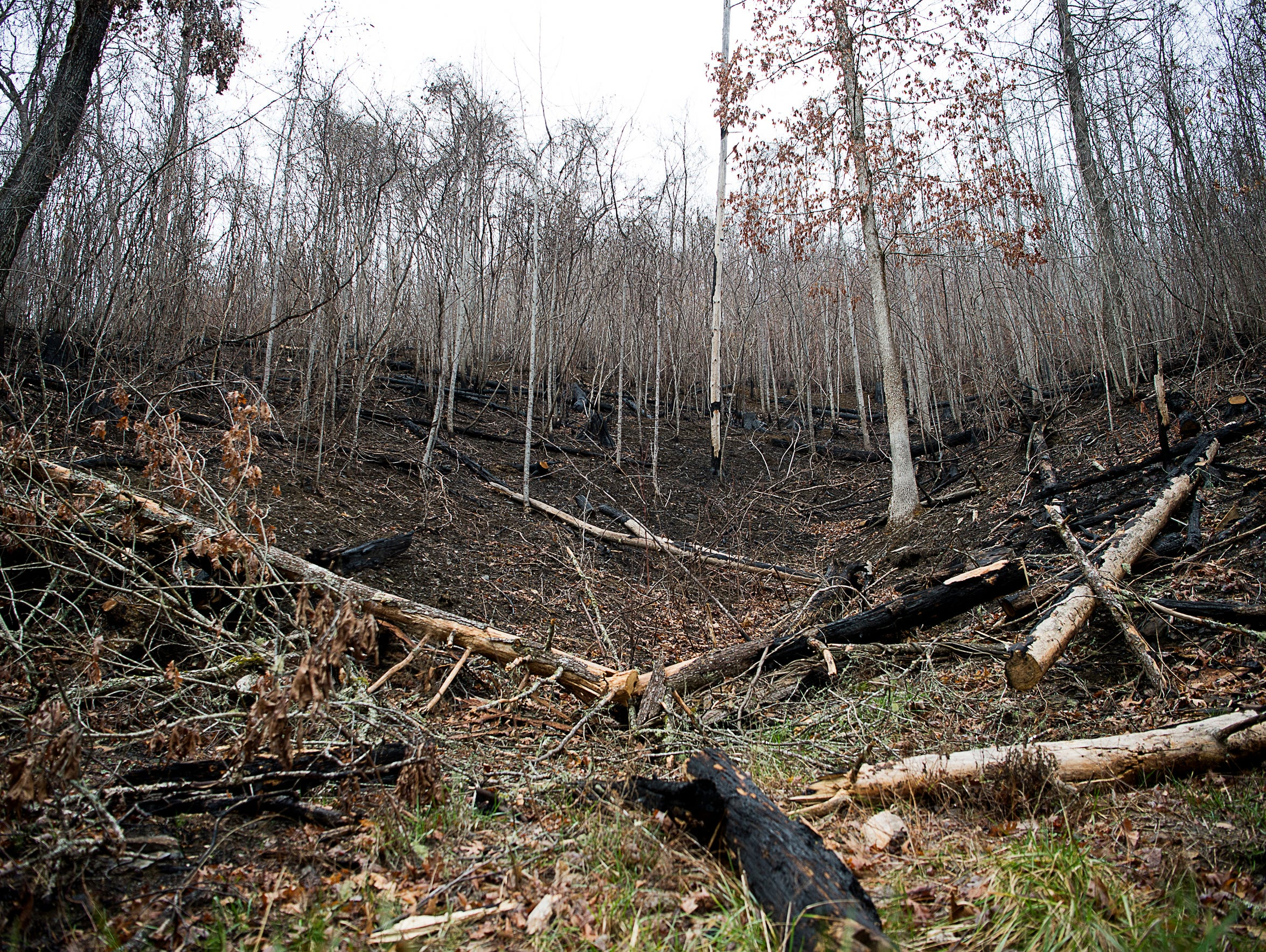 Scorched trees are strewn next to a visible burn line,