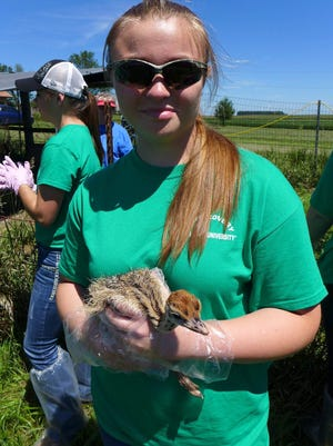 Kat Drews, a junior at Valders High School, holds a bird during her two-week experience at the AgDiscovery program hosted at Iowa State University in Ames, IA.