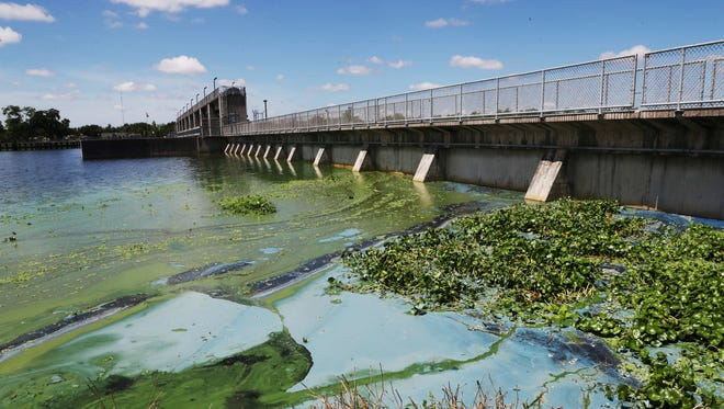 Patches of algae stack up against the Franklin Locks on the north side on Tuesday 6/26/2018.