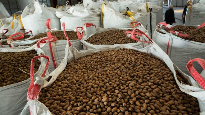 Pecans sit in large containters in the San Saba Pecan plant.