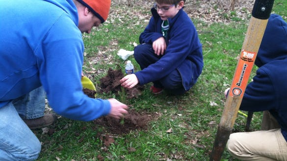 Planting the tree.