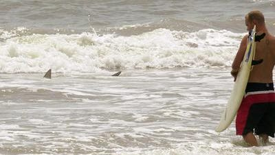 A swimmer was bitten by a possible shark or what Brevard County officials describe as a 'large, toothy sea creature'