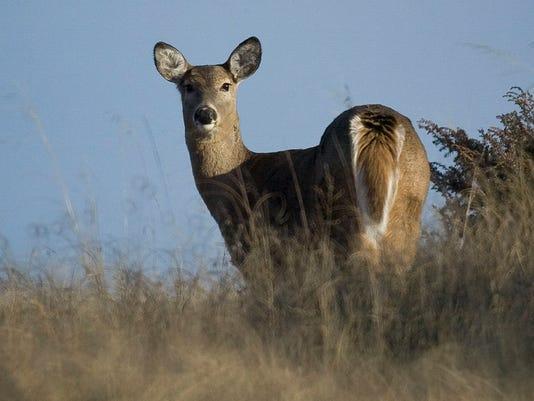 Outdoors_deer local 2.jpg